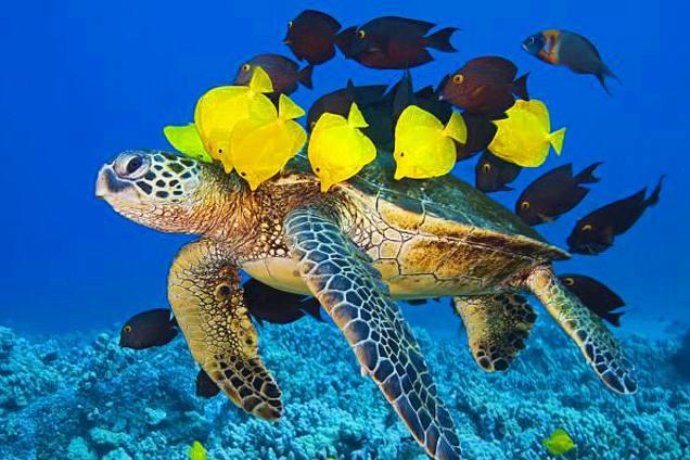 憨憨的海龟需要microbit的帮助