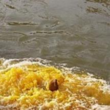 淡水污染源 寻找净化船