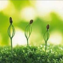 【科学实验探究】基于Mind+平台的种子发芽实验