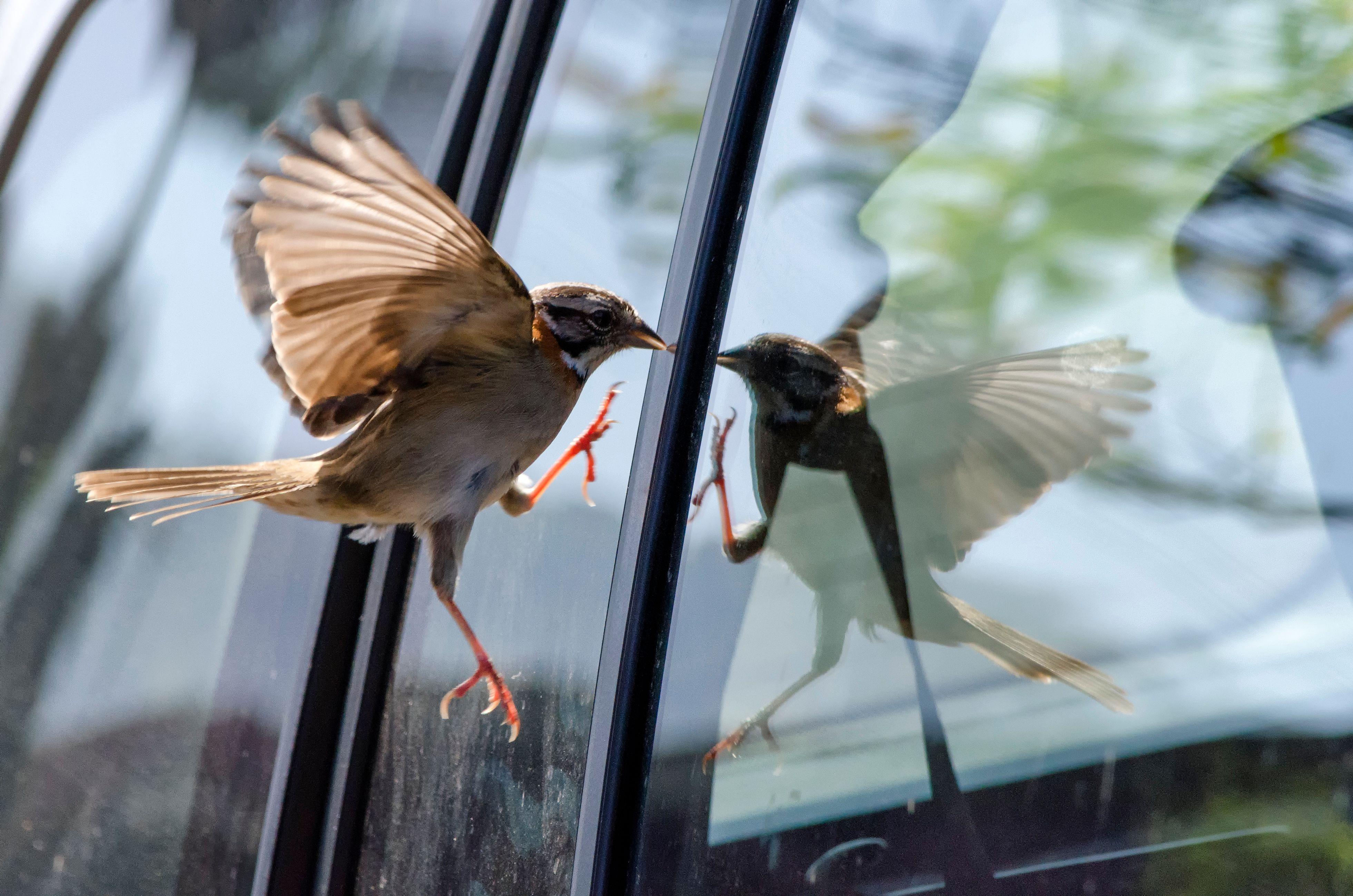 防鸟撞玻璃