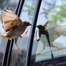 micro:bit创客作品推荐:防鸟撞玻璃