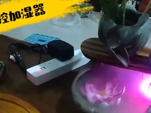 【简易继电器试用】红外加湿器