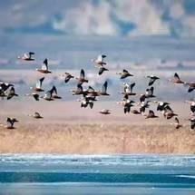 保护生物多样性之microbit野鸭湖防偷鸟蛋装置