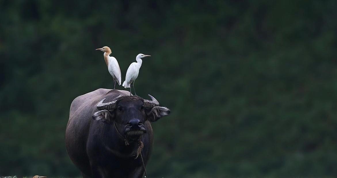智能驱鸟器